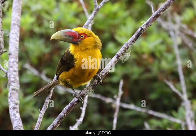 south americas amazon rain forest Holidays to amazon rainforest available now from explore worldwide  or  destinations south america ecuador amazon rainforest holidays & tours.