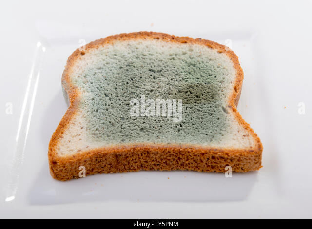 Mould Fungus Bread Mould Stock Photos & Mould Fungus Bread ...