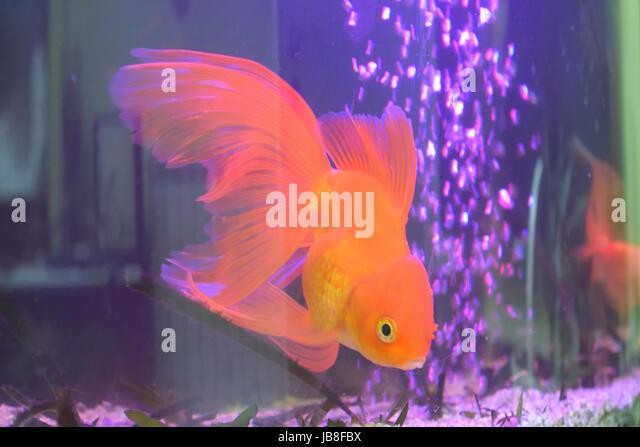 Goldfish tank stock photos goldfish tank stock images for Jb tropical fish