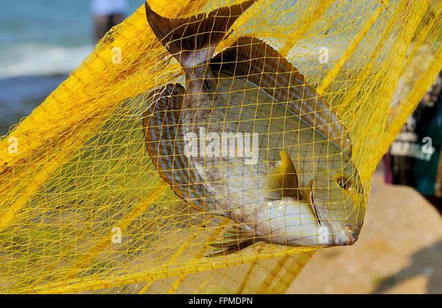 Pond fishing nets stock photos pond fishing nets stock for Big fishing net