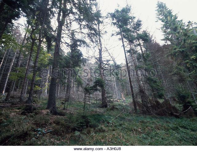 Germany Black Forest Acid Rain Stock Photos & Germany Black Forest ...