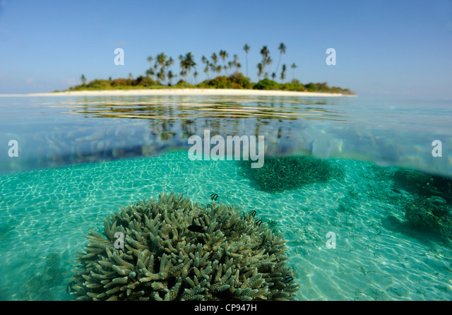 Coral Island, The Maldives, showing coral below water surface. - Stock Image