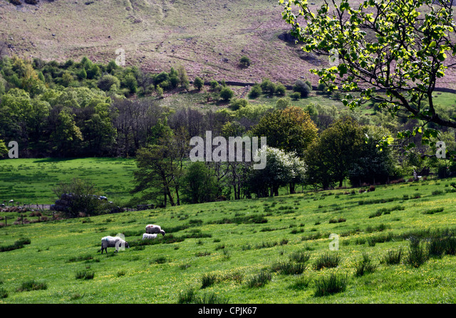 Selside Stock Photos Amp Selside Stock Images Alamy