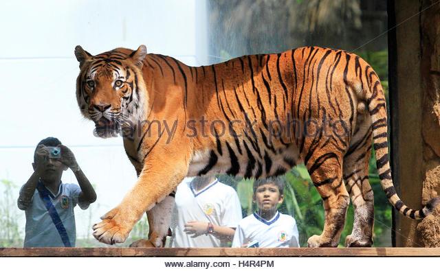 Taronga Zoo Ferry Package