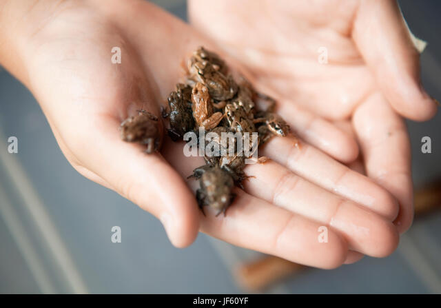 M134 Stock Photos amp M134 Stock Images Alamy : close up of human hand holding little frogs jf60yf from www.alamy.com size 640 x 447 jpeg 34kB