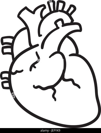 aorta drawing stock photos  u0026 aorta drawing stock images