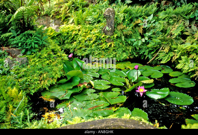 Brief garden sri lanka stock photos brief garden sri for Garden designs in sri lanka