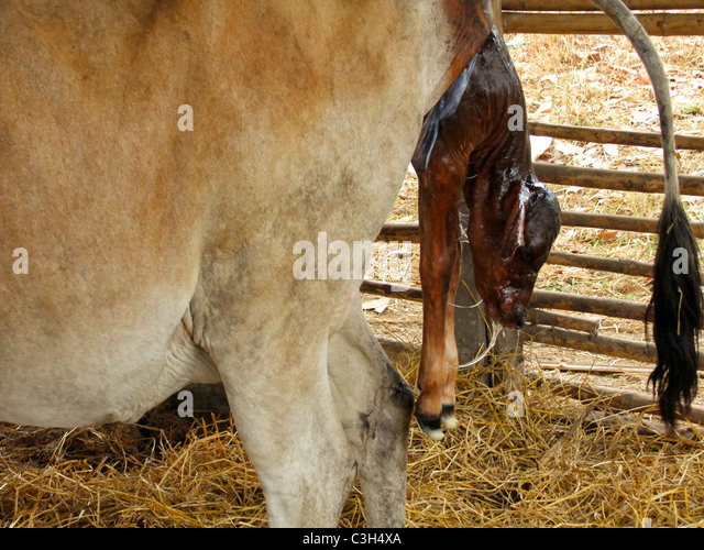 Labour Pains Stock Photos & Labour Pains Stock Images - Alamy