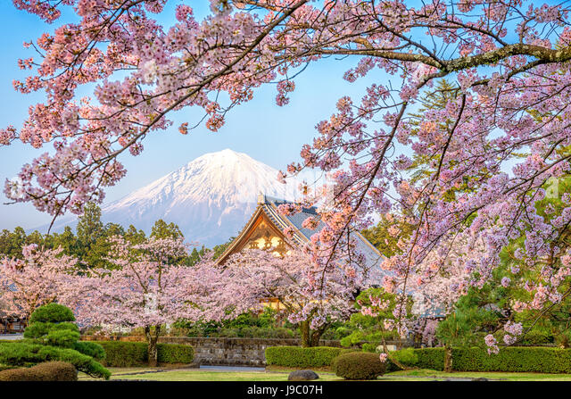 Shizuoka, Japan with Mt. Fuji in spring. - Stock Image