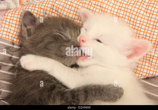 "Gallery of images, with the help of which you will be able to understand the meaning of the word: ""Nn Kitten""."