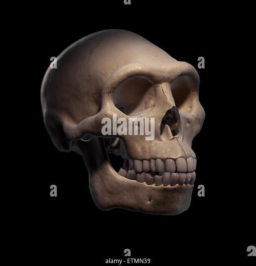 how to draw a homo erectus