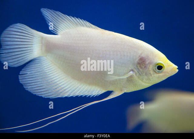 Fischbecken stock photos fischbecken stock images alamy for Ornamental fish