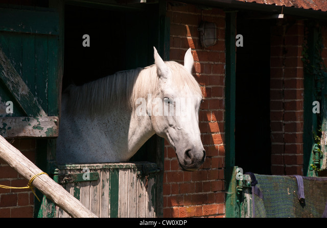 Horse Looking Out Stable Stock Photos Amp Horse Looking Out