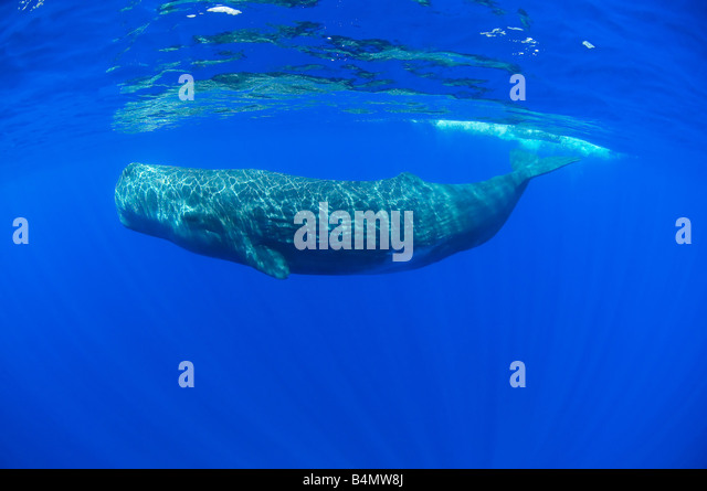 Under Water Stock Photos & Under Water Stock Images - Alamy