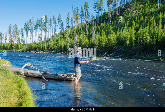 Fly fishing wyoming stock photos fly fishing wyoming for Fly fishing yellowstone river