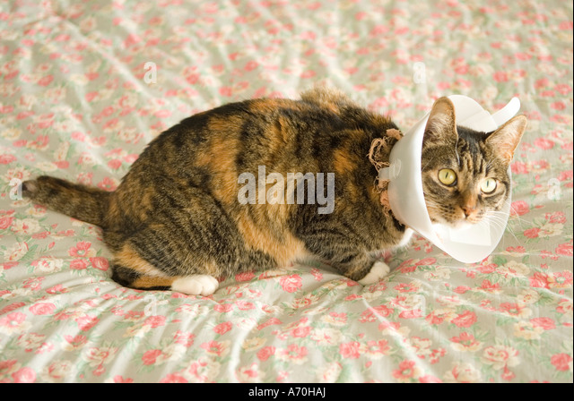 How To Keep Cat From Licking Stitches