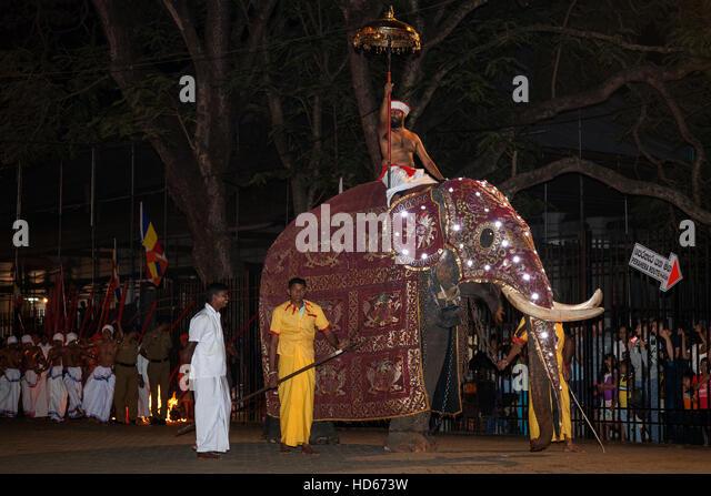 Decorated Elephant Sri Lanka Stock Photos & Decorated ...