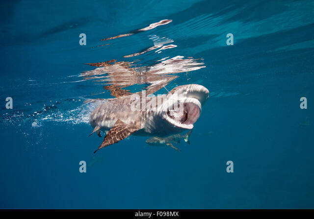 Long lining stock photos long lining stock images alamy for Shark fishing games