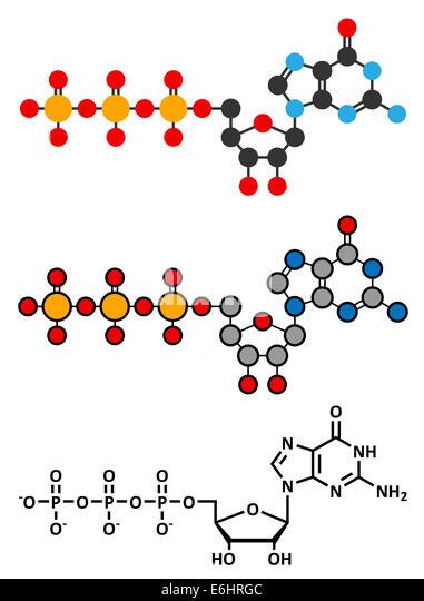 Guanosine triphosphate