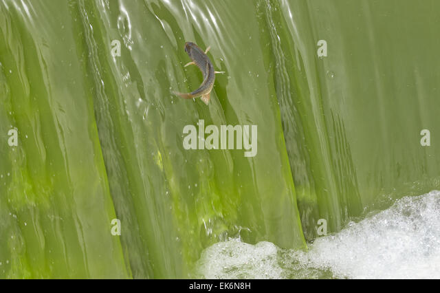 Fish marshes stock photos fish marshes stock images alamy for Oily fish representative species