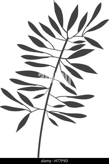 greece illustration leaves stock photos  u0026 greece