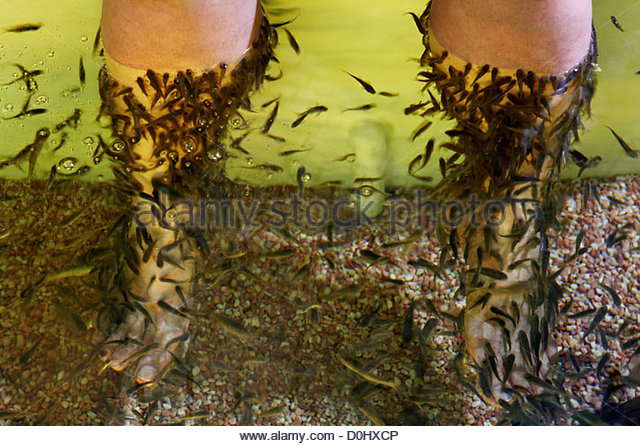 Fish diseases stock photos fish diseases stock images for A salon called fish