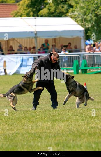 Dog Training Somerset West