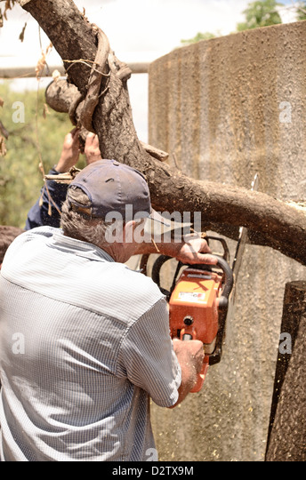 Chainsawing stock photos images alamy
