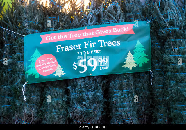 Fresh Christmas Trees Stock Photos & Fresh Christmas Trees Stock ...
