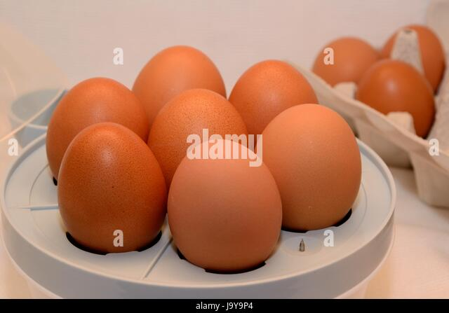 Eierkocher Stock Photos & Eierkocher Stock Images - Alamy | {Eierkocher 64}