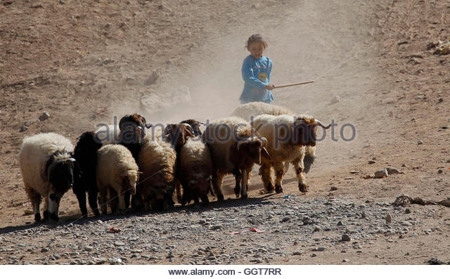 sheep ranch single muslim girls 95250 zip code profile  , rural zip code in sheep ranch, california  the median age for men is 0 while for women the median age is 0.