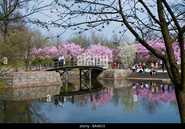 a bridge leads tourists over a pond in the japanese gardens in hasselt belgium