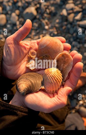 sea shells stock photos sea shells stock images alamy