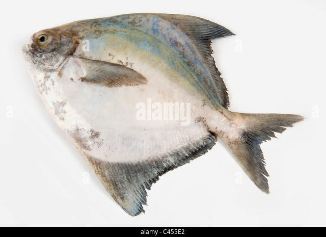 pomfret stock photos pomfret stock images alamy