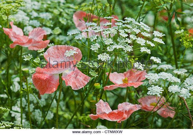 Half Hardy Annuals Top Ten | Gardeners Tips