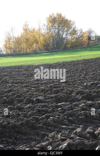 how to make my soil loamy