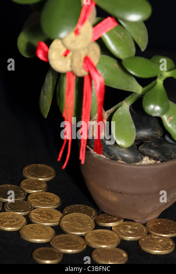 feng shui coins on money tree with gold coins symbolising success and stock photo picture and. Black Bedroom Furniture Sets. Home Design Ideas
