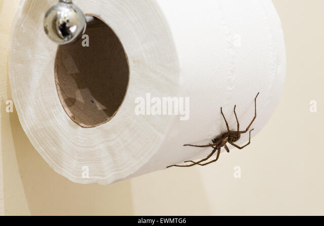 Cardinal spider stock photos cardinal spider stock for Phobia of going to the bathroom