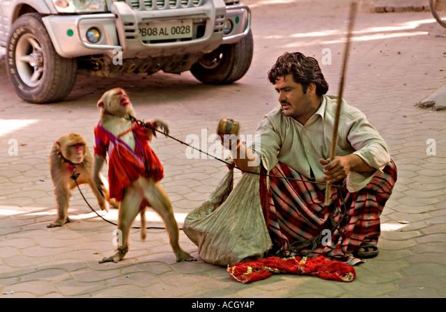 Image result for organ grinder monkey pictures