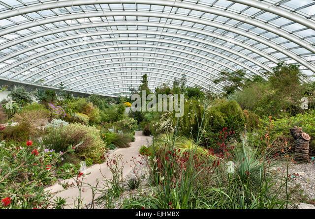 The National Botanic Garden Of Wales, Llanarthney, Wales, UK. The Great  Glasshouse