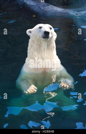 Antarctic Polar Bear Stock Photos & Antarctic Polar Bear ...