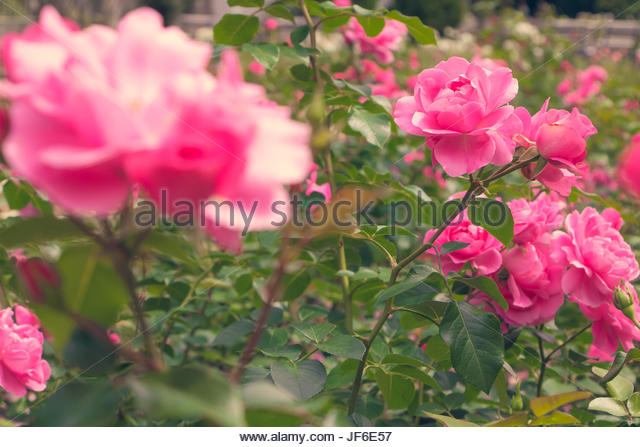 italian garden flowers stock photos italian garden flowers stock images alamy. Black Bedroom Furniture Sets. Home Design Ideas