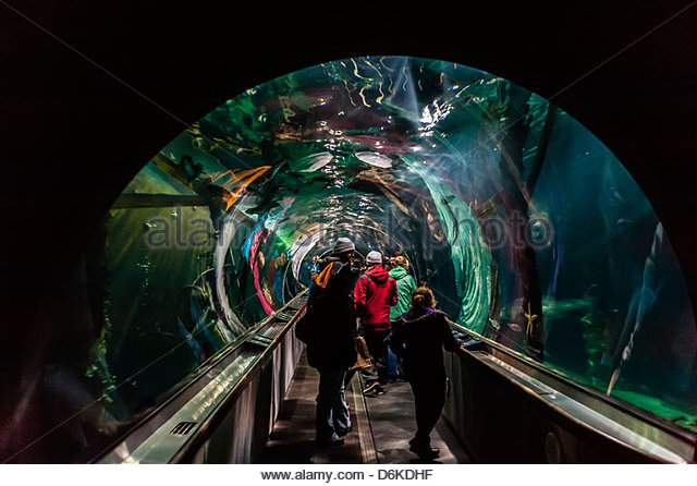 Aquarium Of The Bay San Francisco Stock Photos Aquarium Of The Bay San Francisco Stock Images