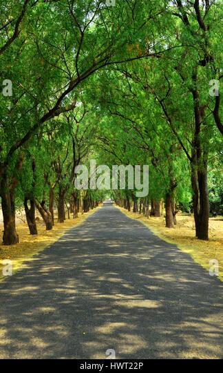 Badbury Rings Elm Trees