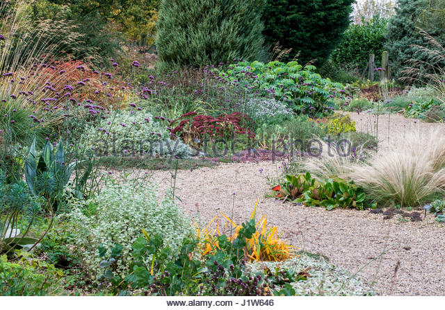 BETH CHATTO GARDENS THE DRY GARDEN IN AUTUMN   Stock Image