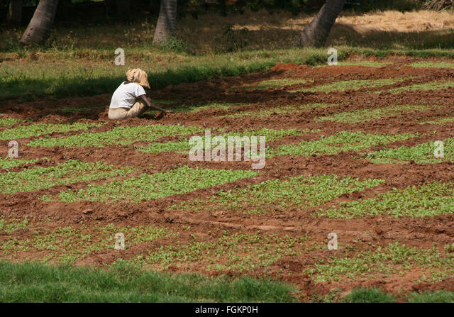 Lone Worker Stock Photos Amp Lone Worker Stock Images Alamy
