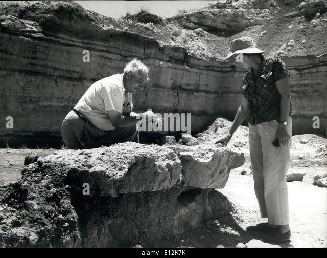leakey family Louis leakey and his colleagues maintained that h habilis was the most likely ancestor of all later  h habilis has clung unsteadily to that exalted perch in the family tree ever since, its.