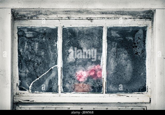 Close-up from abandoned house frozen window with plastic flower at winter - Stock Image