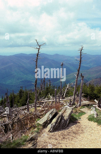 NORTH CAROLINA Mount Mitchell State Park Fraser Fir and Red Spruce ...