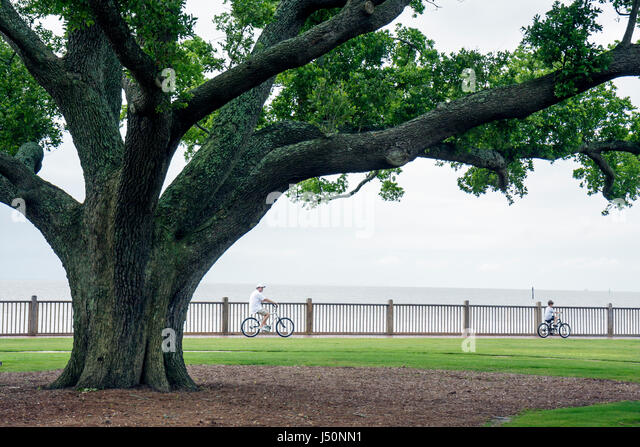 Point Clear Alabama Grand Hotel Marriott Resort hotel lodging Mobile Bay live oak tree bicycle - Stock Image